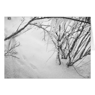 Footsteps in the Snow Greeting Cards
