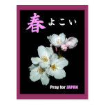 For fund-raising and Cherry blossoms, cherry tree Postcard