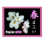 For fund-raising and Cherry blossoms, cherry tree Postcards