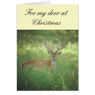 For my deer at Christmas Card