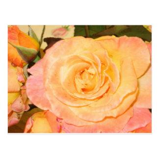 For Rose Lovers Postcard