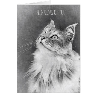 For the Loss of a Pet Cat (card) Card