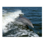 For the Love of Dolphins Postcard
