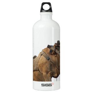 Foraging camel aluminum water bottle