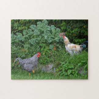 Foraging Chickens Puzzle