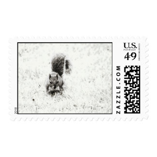 Foraging Squirrel (IR) Stamp