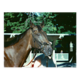 Forego Racehorse 1977 Postcard