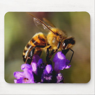 Foreground bee photo mouse pad
