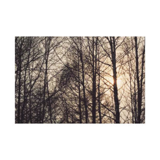 Forest 27  Stretched Canvas Print