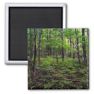 Forest 2 Inch Square Magnet