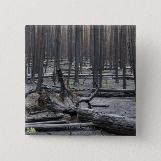 Forest after fire in Yellowstone National Park Button