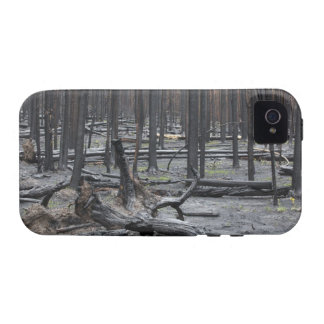 Forest after fire in Yellowstone National Park iPhone 4 Covers