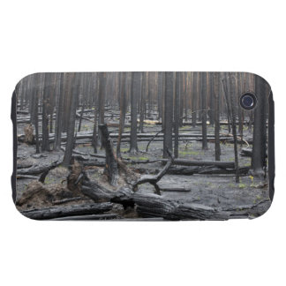 Forest after fire in Yellowstone National Park iPhone 3 Tough Covers