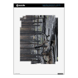 Forest after fire in Yellowstone National Park Skins For iPad 3