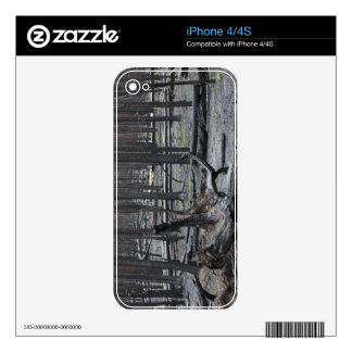 Forest after fire in Yellowstone National Park Skin For The iPhone 4