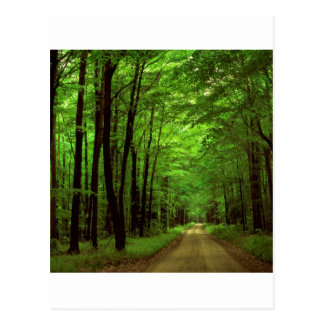 Forest Allegheny Pennsylvania Postcard