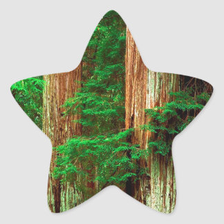 Forest Ancient Giants Big Basin Redwood Park Star Stickers