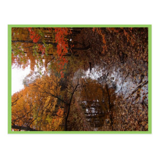 Forest At Automn With Water Postcard