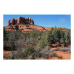 Forest at Cathedral Rock Poster