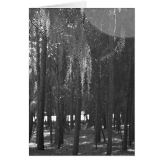 Forest at Sholom Park in Black and White Card
