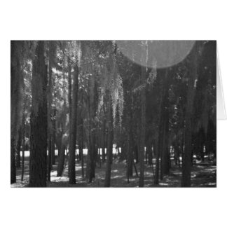 Forest at Sholom Park in Black and White Cards