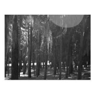 Forest at Sholom Park in Black and White Postcard