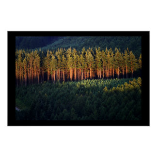Forest at Sunset Poster
