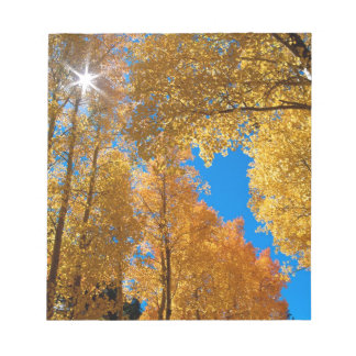 Forest Autumn Colors Inyo Memo Note Pads