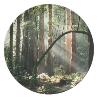 Forest beams plate