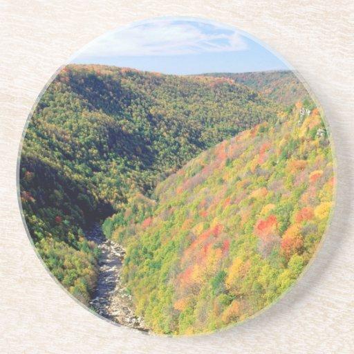 Forest Blackwater River Pendleton Virginia Beverage Coasters