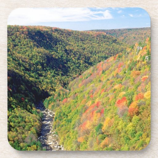 Forest Blackwater River Pendleton Virginia Coasters