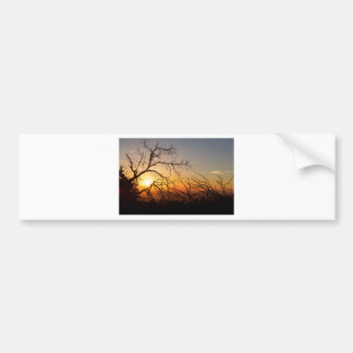 Forest Branches In The Sunset Light Bumper Sticker