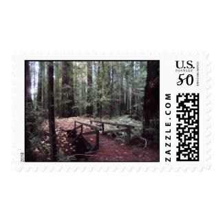 Forest Bridge- Humboldt Redwoods State Park Postage