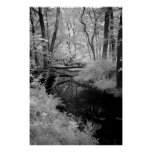 Forest Brook  infrared Posters
