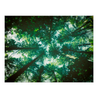 Forest Canopy Poster