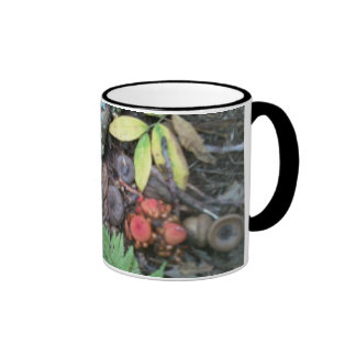 Forest carpet ,catalochee nc ringer mug