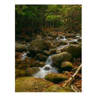 Forest Cascade Postcard