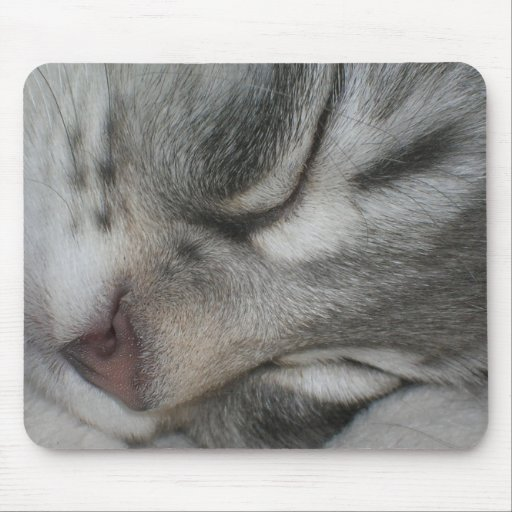 Forest cat mouse mat 2 mouse pad