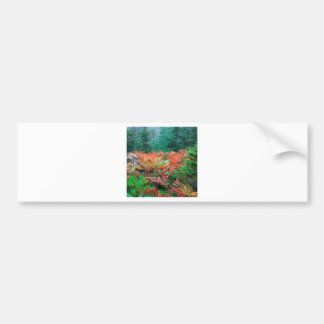 Forest Colorful Ferns In Autumn Acadia Maine Bumper Stickers