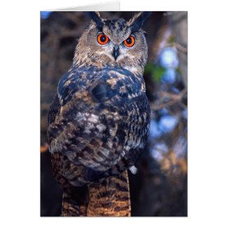 Forest Eagle Owl, Bubo bubo, Native to Eurasia 2 Greeting Card