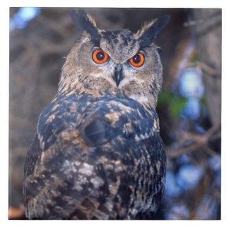 Forest Eagle Owl, Bubo bubo, Native to Eurasia 2 Ceramic Tile