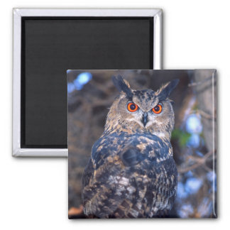 Forest Eagle Owl, Bubo bubo, Native to Eurasia 2 Magnet