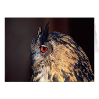 Forest Eagle Owl, Bubo bubo, Native to Eurasia Greeting Cards