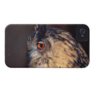 Forest Eagle Owl, Bubo bubo, Native to Eurasia Case-Mate iPhone 4 Case