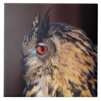 Forest Eagle Owl, Bubo bubo, Native to Eurasia Ceramic Tile