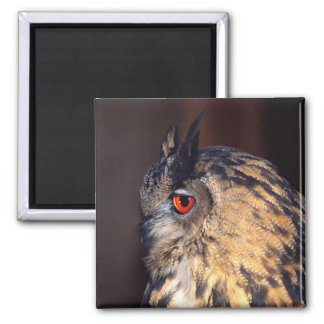 Forest Eagle Owl, Bubo bubo, Native to Eurasia Magnet