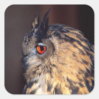 Forest Eagle Owl, Bubo bubo, Native to Eurasia Square Sticker