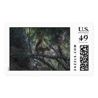 Forest Enchantment Custom Stamp