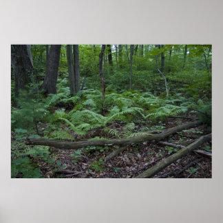 Forest ferns print