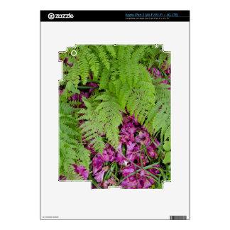 Forest ferns with pink flower petals on ground iPad 3 skin